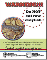 WARNING: Do not eat raw crayfish!
