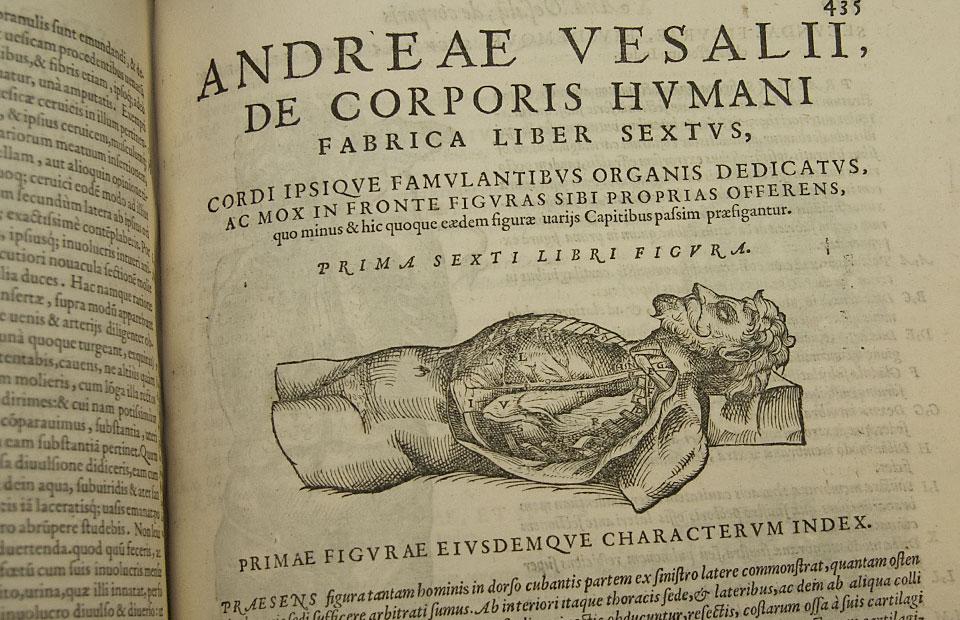 Vesalius\' anatomy | Digital Outlook