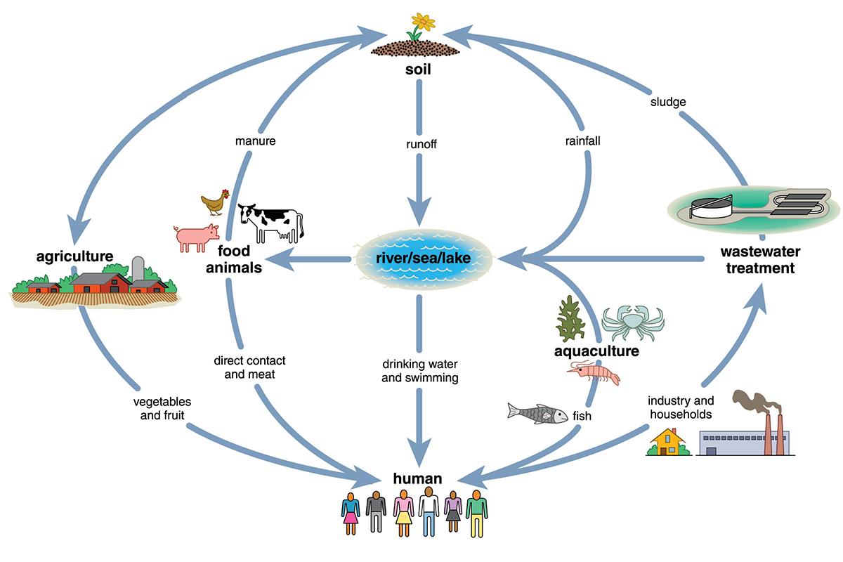 interconnected_habitat